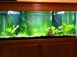 Tank after initial set-up and planting