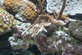 Reef Tank Before Waste-Away